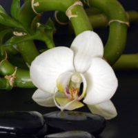 fatima de sakina massages espace aurore aix les bains